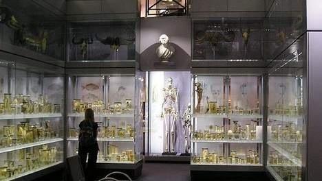 Charles Byrne in zijn glazen graf in het museum